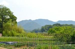 三草山:遠景
